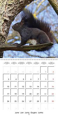 Lovely Squirrel (Wall Calendar 2019 300 × 300 mm Square) - Produktdetailbild 6