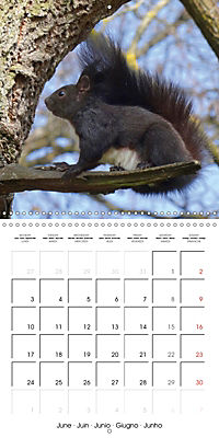Lovely Squirrel (Wall Calendar 2019 300 × 300 mm Square) - Produktdetailbild 6