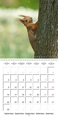 Lovely Squirrel (Wall Calendar 2019 300 × 300 mm Square) - Produktdetailbild 9