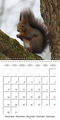 Lovely Squirrel (Wall Calendar 2019 300 × 300 mm Square) - Produktdetailbild 12