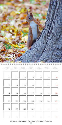 Lovely Squirrel (Wall Calendar 2019 300 × 300 mm Square) - Produktdetailbild 10