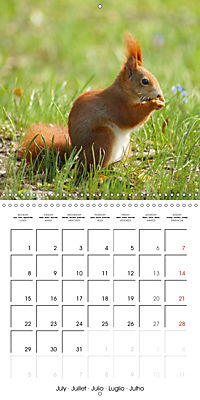 Lovely Squirrel (Wall Calendar 2019 300 × 300 mm Square) - Produktdetailbild 7
