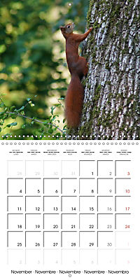 Lovely Squirrel (Wall Calendar 2019 300 × 300 mm Square) - Produktdetailbild 11