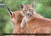 Luchskinder (Tischkalender 2019 DIN A5 quer) - Produktdetailbild 7