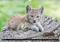 Luchskinder (Wandkalender 2019 DIN A3 quer) - Produktdetailbild 5