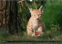 Luchskinder (Wandkalender 2019 DIN A3 quer) - Produktdetailbild 10