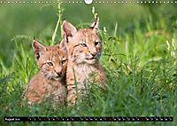 Luchskinder (Wandkalender 2019 DIN A3 quer) - Produktdetailbild 8