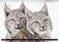 Luchskinder (Wandkalender 2019 DIN A4 quer) - Produktdetailbild 2