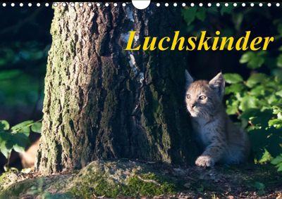 Luchskinder (Wandkalender 2019 DIN A4 quer), Wilfried Martin