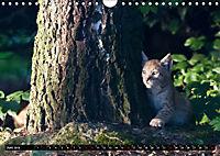 Luchskinder (Wandkalender 2019 DIN A4 quer) - Produktdetailbild 6