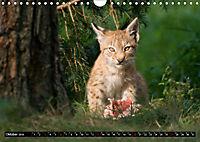 Luchskinder (Wandkalender 2019 DIN A4 quer) - Produktdetailbild 10