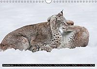 Luchskinder (Wandkalender 2019 DIN A4 quer) - Produktdetailbild 12