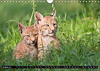 Luchskinder (Wandkalender 2019 DIN A4 quer) - Produktdetailbild 8