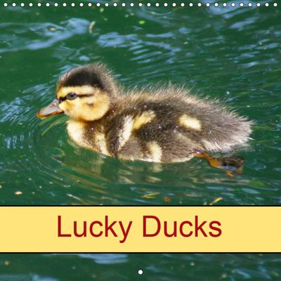 Lucky Ducks (Wall Calendar 2019 300 × 300 mm Square), Kattobello, k.A. Kattobello