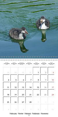 Lucky Ducks (Wall Calendar 2019 300 × 300 mm Square) - Produktdetailbild 2