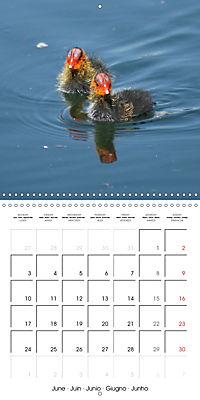 Lucky Ducks (Wall Calendar 2019 300 × 300 mm Square) - Produktdetailbild 6