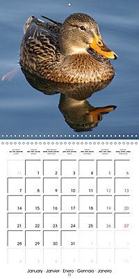 Lucky Ducks (Wall Calendar 2019 300 × 300 mm Square) - Produktdetailbild 1
