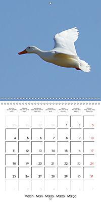 Lucky Ducks (Wall Calendar 2019 300 × 300 mm Square) - Produktdetailbild 3