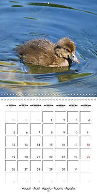 Lucky Ducks (Wall Calendar 2019 300 × 300 mm Square) - Produktdetailbild 8