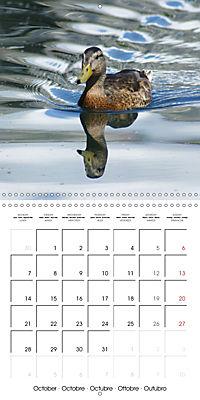 Lucky Ducks (Wall Calendar 2019 300 × 300 mm Square) - Produktdetailbild 10