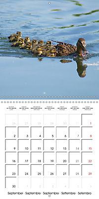 Lucky Ducks (Wall Calendar 2019 300 × 300 mm Square) - Produktdetailbild 9