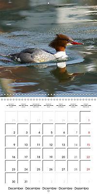 Lucky Ducks (Wall Calendar 2019 300 × 300 mm Square) - Produktdetailbild 12