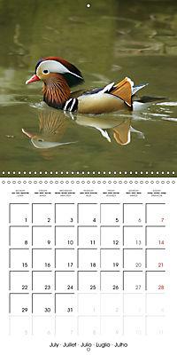Lucky Ducks (Wall Calendar 2019 300 × 300 mm Square) - Produktdetailbild 7