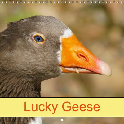 Lucky Geese (Wall Calendar 2019 300 × 300 mm Square), kattobello