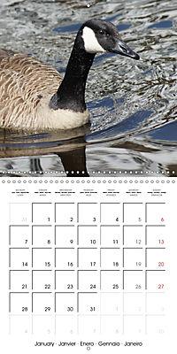 Lucky Geese (Wall Calendar 2019 300 × 300 mm Square) - Produktdetailbild 1