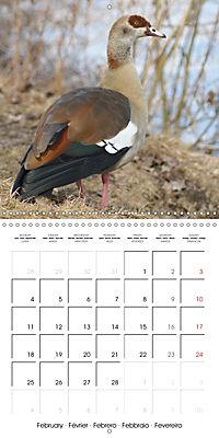 Lucky Geese (Wall Calendar 2019 300 × 300 mm Square) - Produktdetailbild 2