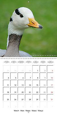 Lucky Geese (Wall Calendar 2019 300 × 300 mm Square) - Produktdetailbild 3
