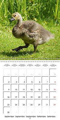 Lucky Geese (Wall Calendar 2019 300 × 300 mm Square) - Produktdetailbild 9