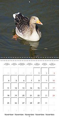 Lucky Geese (Wall Calendar 2019 300 × 300 mm Square) - Produktdetailbild 11