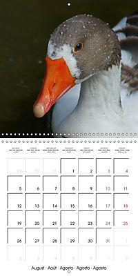 Lucky Geese (Wall Calendar 2019 300 × 300 mm Square) - Produktdetailbild 8