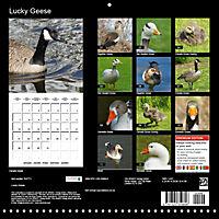 Lucky Geese (Wall Calendar 2019 300 × 300 mm Square) - Produktdetailbild 13