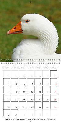 Lucky Geese (Wall Calendar 2019 300 × 300 mm Square) - Produktdetailbild 12