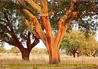 Lust auf NaTour - Bäume (Wandkalender 2019 DIN A2 quer) - Produktdetailbild 6