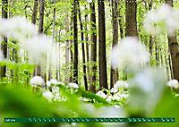 Lust auf NaTour - Bäume (Wandkalender 2019 DIN A2 quer) - Produktdetailbild 7