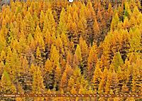 Lust auf NaTour - Bäume (Wandkalender 2019 DIN A2 quer) - Produktdetailbild 11