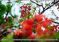 Lust auf NaTour - Bäume (Wandkalender 2019 DIN A2 quer) - Produktdetailbild 9