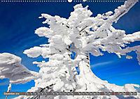 Lust auf NaTour - Bäume (Wandkalender 2019 DIN A2 quer) - Produktdetailbild 12
