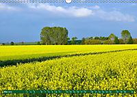 Lust auf NaTour - Bäume (Wandkalender 2019 DIN A3 quer) - Produktdetailbild 5