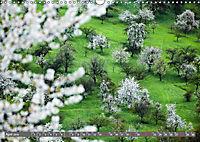 Lust auf NaTour - Bäume (Wandkalender 2019 DIN A3 quer) - Produktdetailbild 4