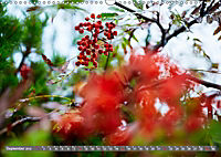 Lust auf NaTour - Bäume (Wandkalender 2019 DIN A3 quer) - Produktdetailbild 9