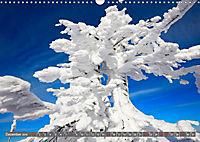 Lust auf NaTour - Bäume (Wandkalender 2019 DIN A3 quer) - Produktdetailbild 12
