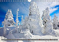 Lust auf NaTour - Bäume (Wandkalender 2019 DIN A4 quer) - Produktdetailbild 1