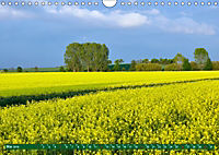 Lust auf NaTour - Bäume (Wandkalender 2019 DIN A4 quer) - Produktdetailbild 5
