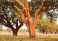 Lust auf NaTour - Bäume (Wandkalender 2019 DIN A4 quer) - Produktdetailbild 6