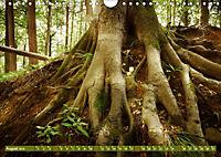 Lust auf NaTour - Bäume (Wandkalender 2019 DIN A4 quer) - Produktdetailbild 8