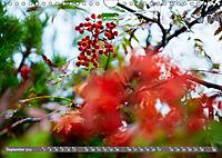 Lust auf NaTour - Bäume (Wandkalender 2019 DIN A4 quer) - Produktdetailbild 9